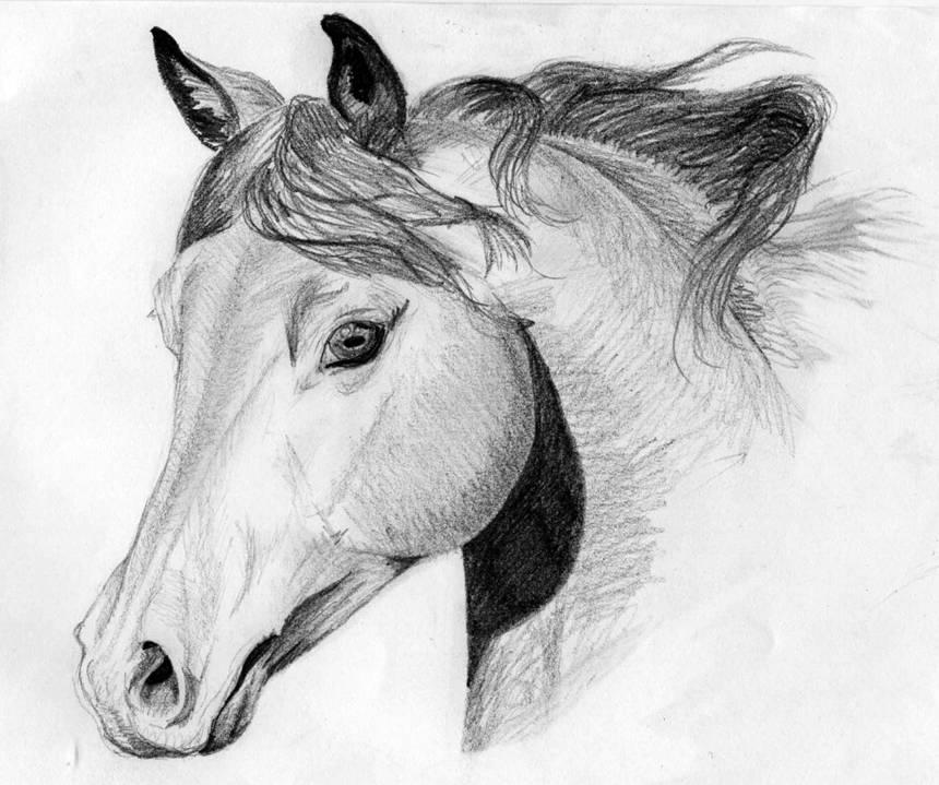 Dessin de cour de cheval - Cheval a dessiner facile ...